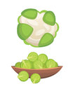 Set vector Cabbage and Lettuce. Vegetable green kohlrabi, other different cabbages.