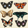 Set of vector colorful realistic butterflies for design collection Stock Photo