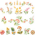 Set of vector flowers in ukrainian folk style art soft and lovely colors elements for decoration and design Royalty Free Stock Images