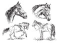 Set of vector hand drawing horses in black and white
