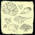 Set of vector hand drawn seashells Royalty Free Stock Photo