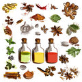 Set of vector hand drawn spices for design