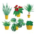 Set of house indoor plants, potted plants collection on white background. Flat design. Garden