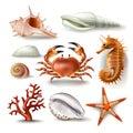 Set of vector illustrations seashells, coral, crab and starfish
