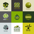 Set of vector labels and emblems with olive branch logos Royalty Free Stock Photos