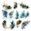 Set of vector realistic colorful feathers Royalty Free Stock Photo