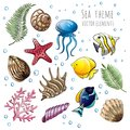 Set of vector seashells, starfish and jellyfish on white background for design. Vector illustration. Royalty Free Stock Photo