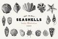 Set of vector vintage seashells. Nine black illustrations of shells. Royalty Free Stock Photo