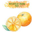 Set of vector watercolor oranges Royalty Free Stock Photo