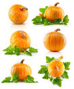 Set vegetable pumpkins with green leaves Royalty Free Stock Image