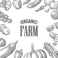Set vegetables and organic farm lettering. Vector black engraving vintage
