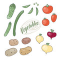 Set of vegetables vector illustration Royalty Free Stock Image