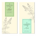 Set of vertical vintage banners, labels with sketch mint leaves, Designed vector frame with blossom peppermint and space