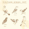 Set of vintage birds beige and brown Stock Photo