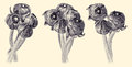 Set of vintage floral bouquets with buttercup buds