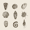 Set of vintage seashells nine black illustrations shells on a beige background Royalty Free Stock Photos