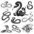 Set Viper Snake. serpent cobra and python, anaconda or viper, royal. engraved hand drawn in old sketch, vintage style Royalty Free Stock Photo