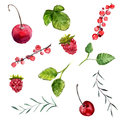 Set of watercolor berries cherry, red currant and raspberry, leaves of mint and rosemary. Vector design elements isolated on white
