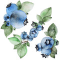Set of watercolor blueberry