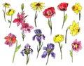 Set of watercolor garden flowers