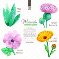 Set of watercolor madicinal plants Royalty Free Stock Photo
