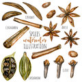 Set of watercolor spices & x28;cinnamon, anise, caraway, cardamom and cloves& x29;