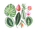 Set of watercolor tropical flowers and leaves.
