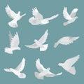 Set white doves peace isolated on background. Bird illustration. Royalty Free Stock Photo