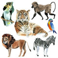 Set of wild African animals. Watercolor illustration in white background. Royalty Free Stock Photo