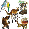 Set with wild animals of australia isolated on white background Stock Image