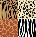 Set of wild animals skin giraffe cheetah tiger and zebra skins Stock Image
