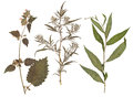 Set of wild dry pressed flowers and leaves isolated Royalty Free Stock Photo