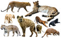 Set of wild mammals isolated over white Royalty Free Stock Photo