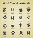 Set of wild wood animal tracks Royalty Free Stock Photo