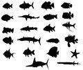 Sets of silhouette fishes vector with both freah water and sea create by Stock Photography