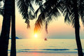 Setting sun through the palm leaves on a tropical beach. Travel. Royalty Free Stock Photo
