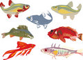 Seven color fishes collection Stock Images