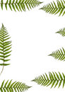Seven Ferns Royalty Free Stock Photography