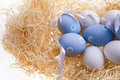 Several colored eggs Royalty Free Stock Image