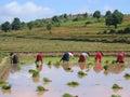 Several farmer women Royalty Free Stock Photo