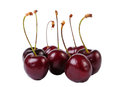 Several sweet cherries isolated on white Stock Photos