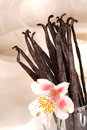 Several vanilla beans in a glass with flower Royalty Free Stock Photography