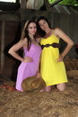 Sexy country girls two beautiful in a barn wearing colorful dresses Royalty Free Stock Photography