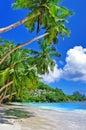 Seychelles palm plaże Zdjęcia Royalty Free