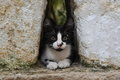 Sfax medina cat a black and white sitting between two big sandstone rocks in Royalty Free Stock Photo