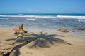 Shade of palm tree on a sandy beach caribbean sea costa rica Stock Photos