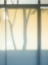 Shade and shadow bstract silhouette tree background blurry back of translucent panel Royalty Free Stock Image
