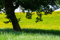 Shade of tree against summer landscape a in uk countryside Stock Photo
