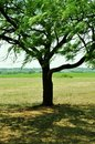Shade tree a on a hot summer texas day Royalty Free Stock Photos