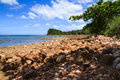 Shade of tree rock beach and blue sky day Royalty Free Stock Images